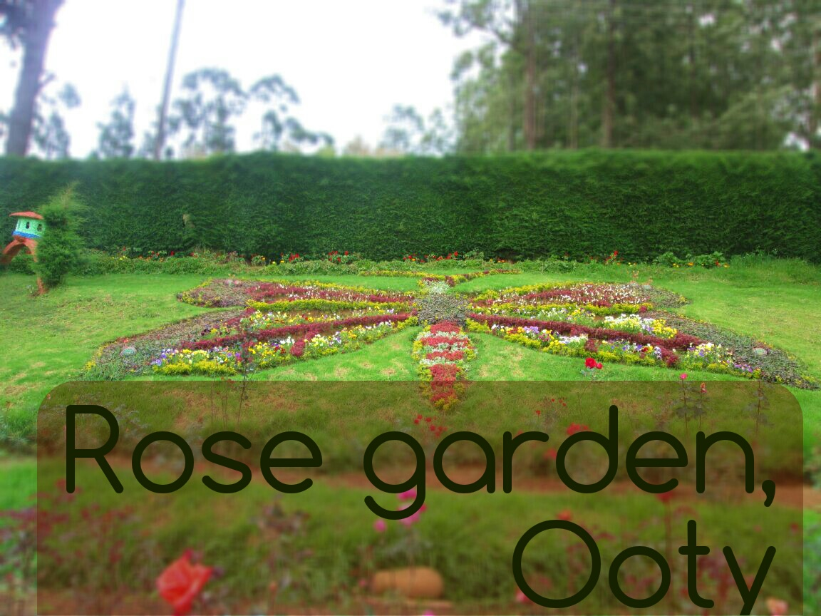 rose-garden-ooty