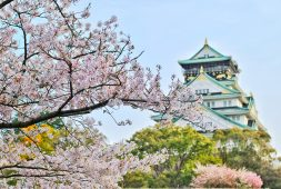 the-guide-to-japans-cherry-blossom-season